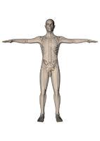 Mann_stehend_Skelett_vorn_weiss