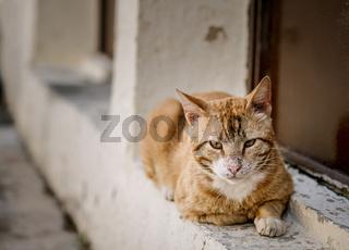 Portrait of Street Cats in Crete Greece
