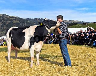 Präsentation der Holsteinkuh Bianca an der SWISSCOW Topschau Saanenland, Gstaad, Schweiz