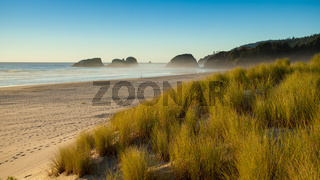 Sand dunes and grasses on a beach, Cannon Beach, Oregon