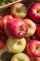 Frische Äpfe