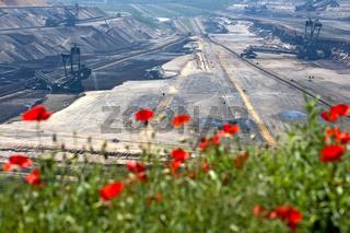 Mohnblumen am Rand des Tagebaus Garzweiler