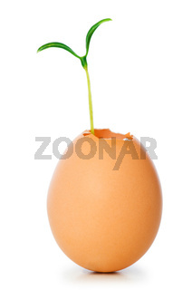 New life concept with seedling and egg on white