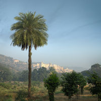 Amber fort. View from afar with palm trees