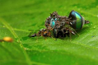 Ants eating eyeball, Aarey Milk Colony , INDIA