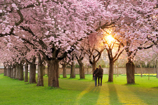 Magnificent springtime scenery
