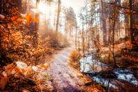 Morning in the Karlstal near Trippstadt