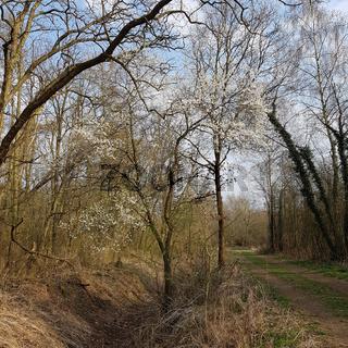 Weg am Kalktuffgelände am Tegeler Fließ im Norden von Berlin im Vorfrühling