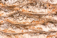 Closeup of a palm trees bark