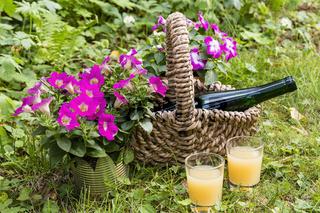 Flasche und Glas im Garten, bottle and glass in a garten