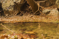 Winter leaves in the water in the gorge of Richtis at winter, Crete, Greece.