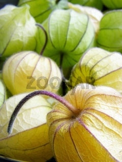 Physalis, Kapstachelbeere