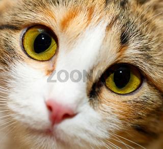 Nahaufnahme Katzenaugen