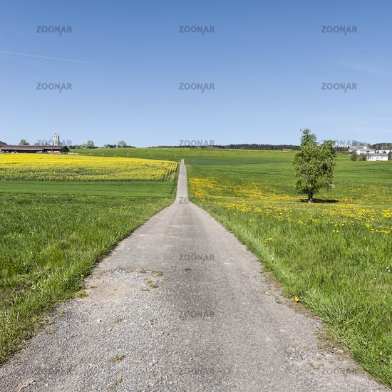 Asphalt road between  meadows  in Switzerland