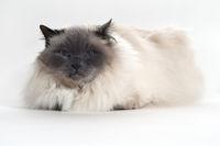 Katze im Blick