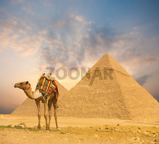 Fiery Sunset Egypt Pyramids Camel Foreground H