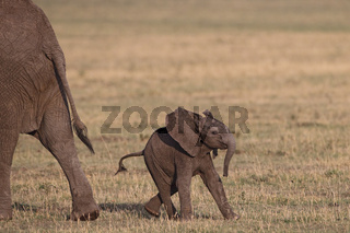Baby elephant with mother, Masai Mara, Kenya,Kenia