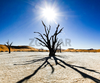Dead trees and dunes in a salt pan. Hot desert.