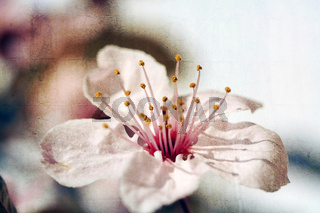 Rosa Blütenzauber mit Textur