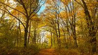 Pfad im Wald