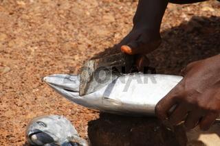 Ältere Frau zerteilt Fische