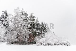 idyllischer Wald im Winter