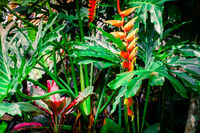 Tropical flowers in fantasy rainforest