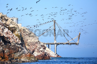 Old pier with birds in Ballestas Islands Reserve in Peru