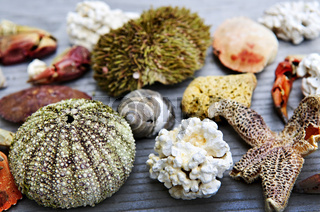 Sea treasures