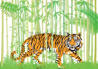 Asiatischer Tiger.jpg