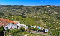 Weinberg-Terrassen im Pinhao Tal, Sao Cristovao do Douro, Portugal