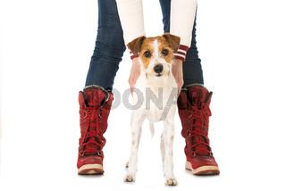 Hund zwischen Beinen