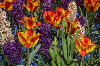 Bunte Frühlingsblumenrabatte, Niederlande