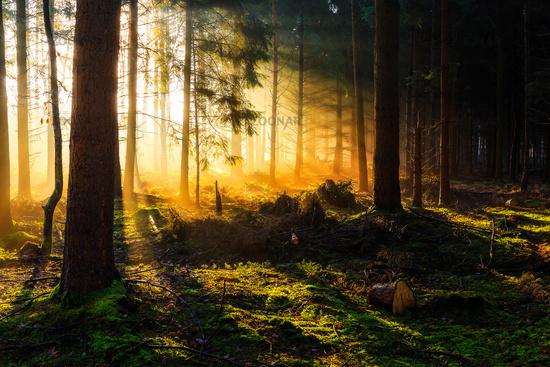 Sunrise in a forest near Friedeburg