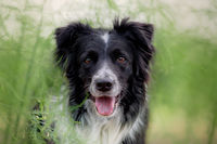 BENZ KERSTIN - BORDER COLLIE-2.jpg