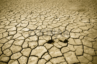 Cracked soil of desert