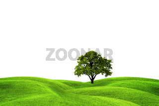 Tree on green field, isolated against a white background