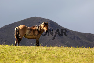 Mare grazes in the mountain