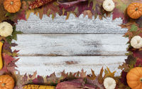 Autumn seasonal foliage and decorations for seasonal holidays on white rustic wooden boards