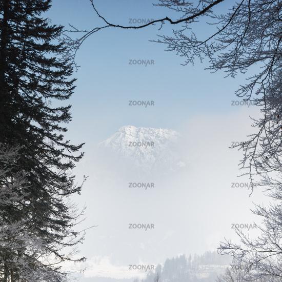 View through branches to a mountain peak hiding behind fog.