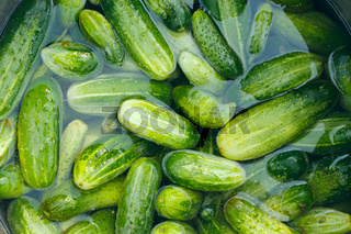 Cucumbers prepared for preservation