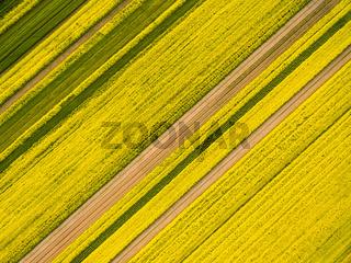 aerial view of rapeseed flower field in spring