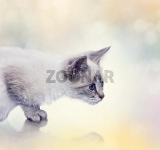 White Kitten portrait