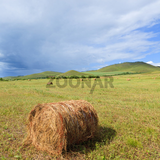 meadow of Inner Mongolia