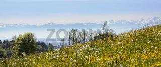 Blick vom Höchsten zu den Schweizer Alpen