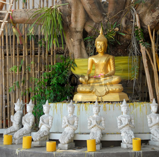 Golden Buddha under a Bodhi tree