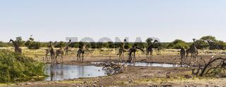 Gruppe von Giraffen und Springboecken an einem Wasserloch