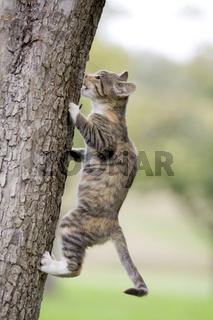 Katze klettert auf Baum, Cat climbing on tree