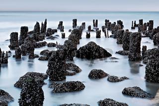 Pfähle und Steine mit Muscheln bewachsen