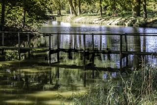Morscher, Holzsteg am Teich